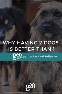 Why Having 2 Dogs Is Better Than 1