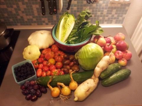 Eine Auswahl der Ernte 2012.