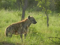 Kruger-Nationalpark_08