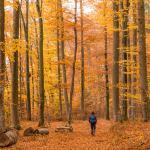 Die Wanderung führt durch schönen Buchenwald