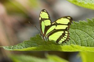 When poop is beautiful – #butterfly