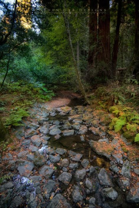 Trickle-Muir-Woods-SF
