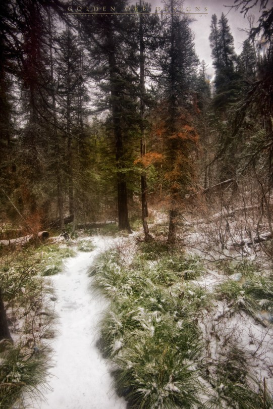 Icy-Hike