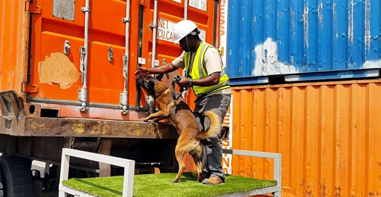 awf-dog-at-container