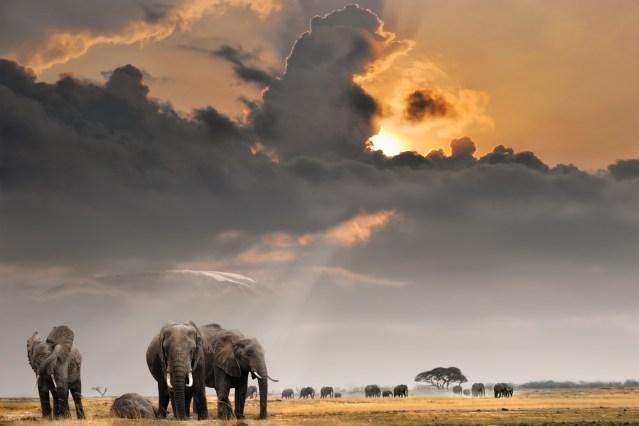 elelphants-with-cloud_depositphotos_5450014_original