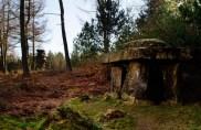 Druid's Temple 3