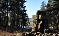 Druid's viewpoint