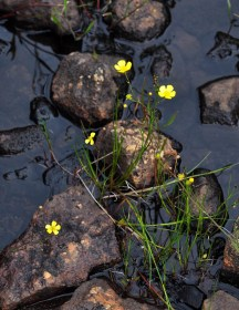 Flowers in the stream