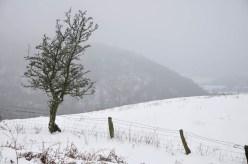 Tree and Helmeth Hill