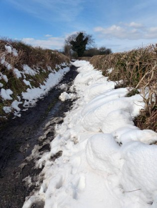 Snow in the lane