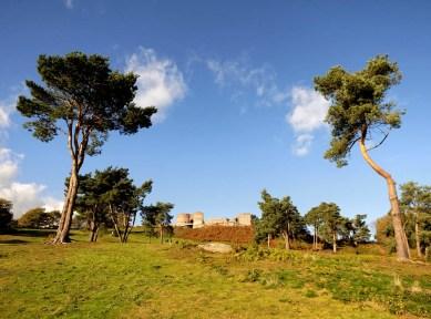 Beeston Pines