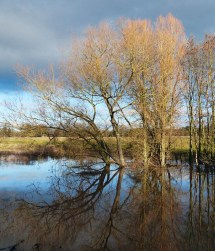 Flood water reflection