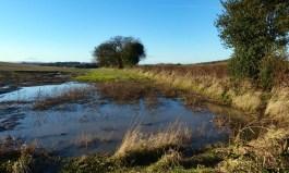 A wet field corner