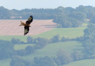 Kite over Corvedale 2