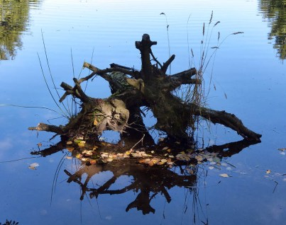 Roots in the reservoir