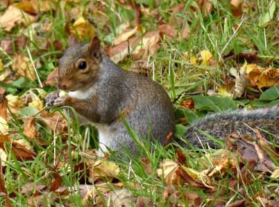 Enjoying a chestnut