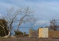 Rocks and dead tree