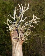 An unusual tree
