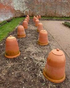 Rhubarb pots