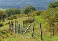 Fence again