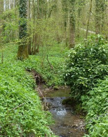 Woodland watercourse
