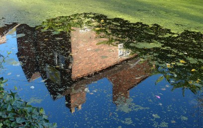 Reflection with duckweed