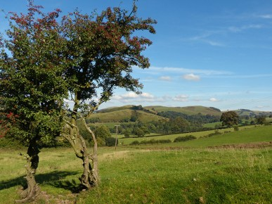 Hawthorn and Ratlinghope Hill