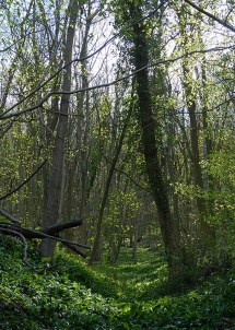 Benthall Edge woodland