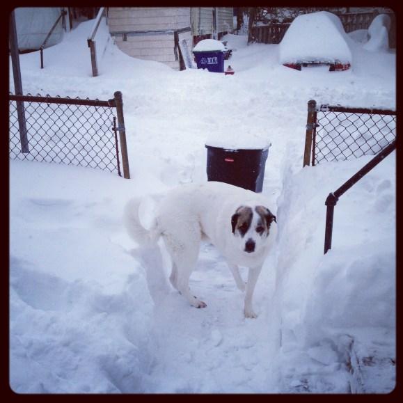 2013 02-09 Dexter in the Snow