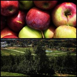 2016-10-15-apple-picking-2