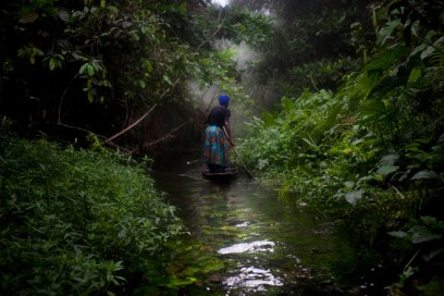 Rain forest in the Niger Delta
