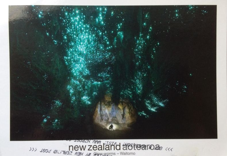 NZ Glow worms