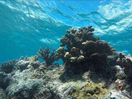 Photos from Vanuatu Independent