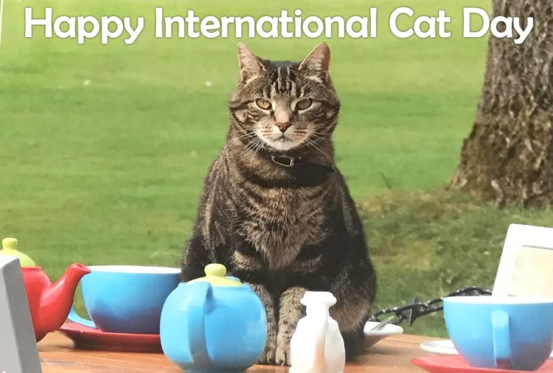 maisie happy int cat day