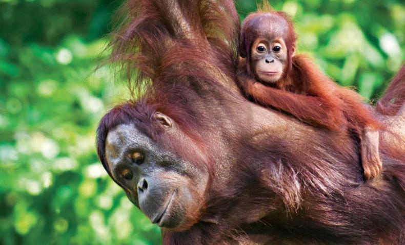 borneo-wildlife-adventure.ngsversion.1511365178677.adapt.1900.1