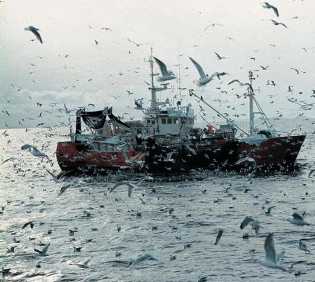 Landing-av-fisk-på-Svalbard