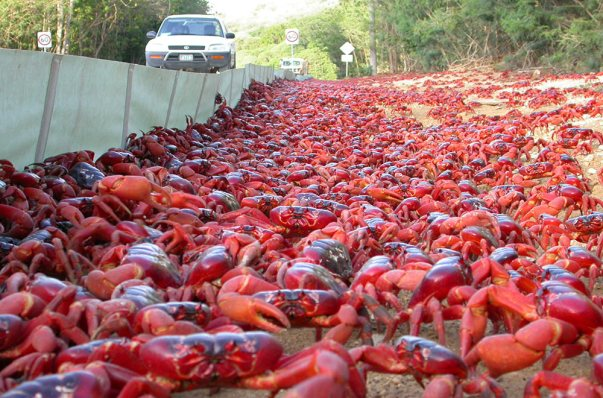 crab-barriers