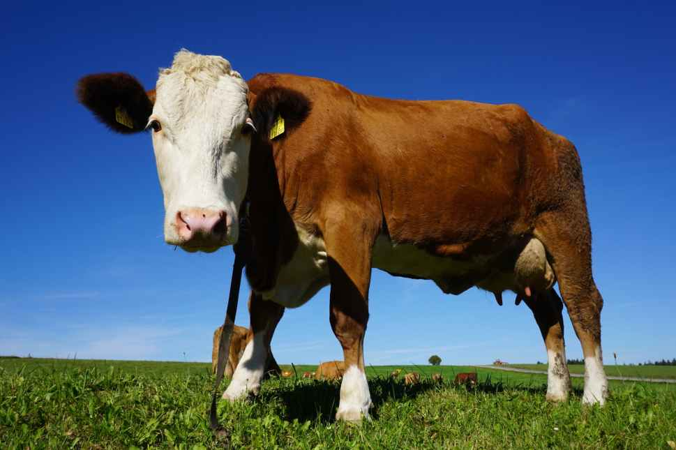 The following are factors for the development of beef farming in USA