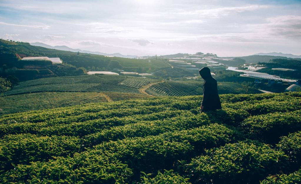 Characteristics of Plantation Agriculture