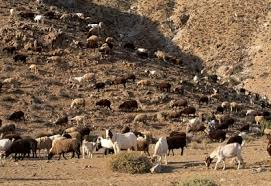 Image result for OVERGRAZING
