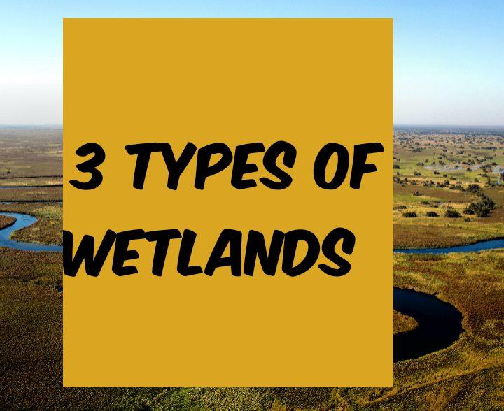 3 types of wetlands