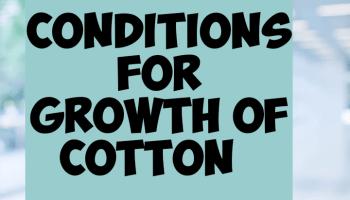 Condition favoring cotton farming