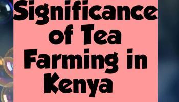 Importance of tea farming in Kenya