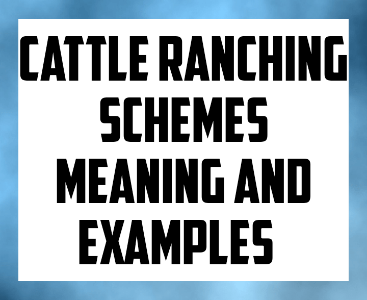 Cattle ranching schemes meaning and examples