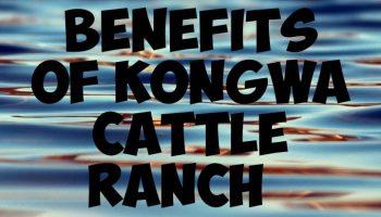 Benefits of kongwa cattle ranch