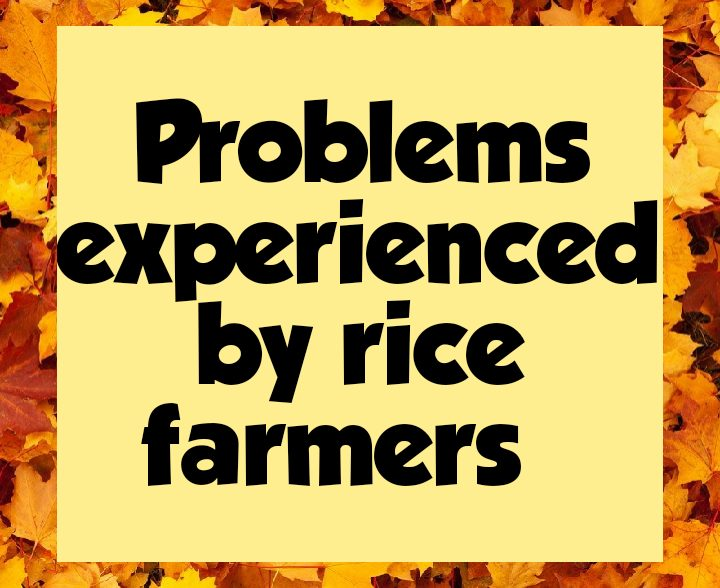 Problems facing rice farmers