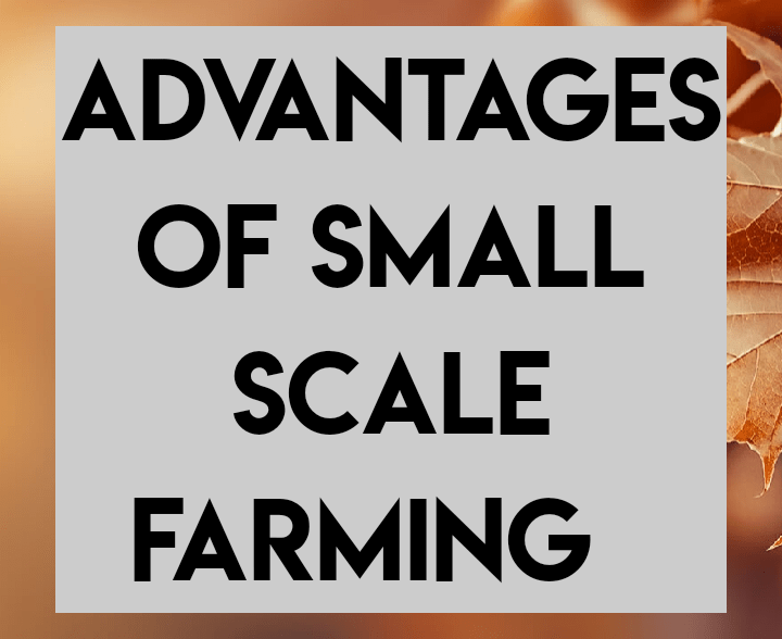 Advantages of small scale farming
