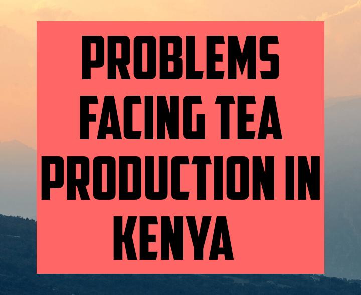 Problems facing tea production in kenya