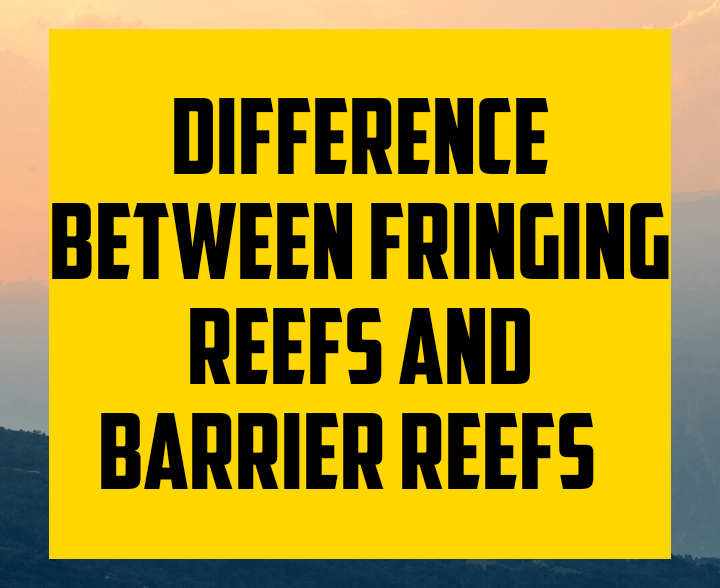 Difference between fringing reefs and barrier reef