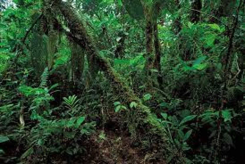 Equatorial climate can simply be defined as climate along the equator. the equatorial climate is also known as rainforest climate because there are mostly rainforest along the equator